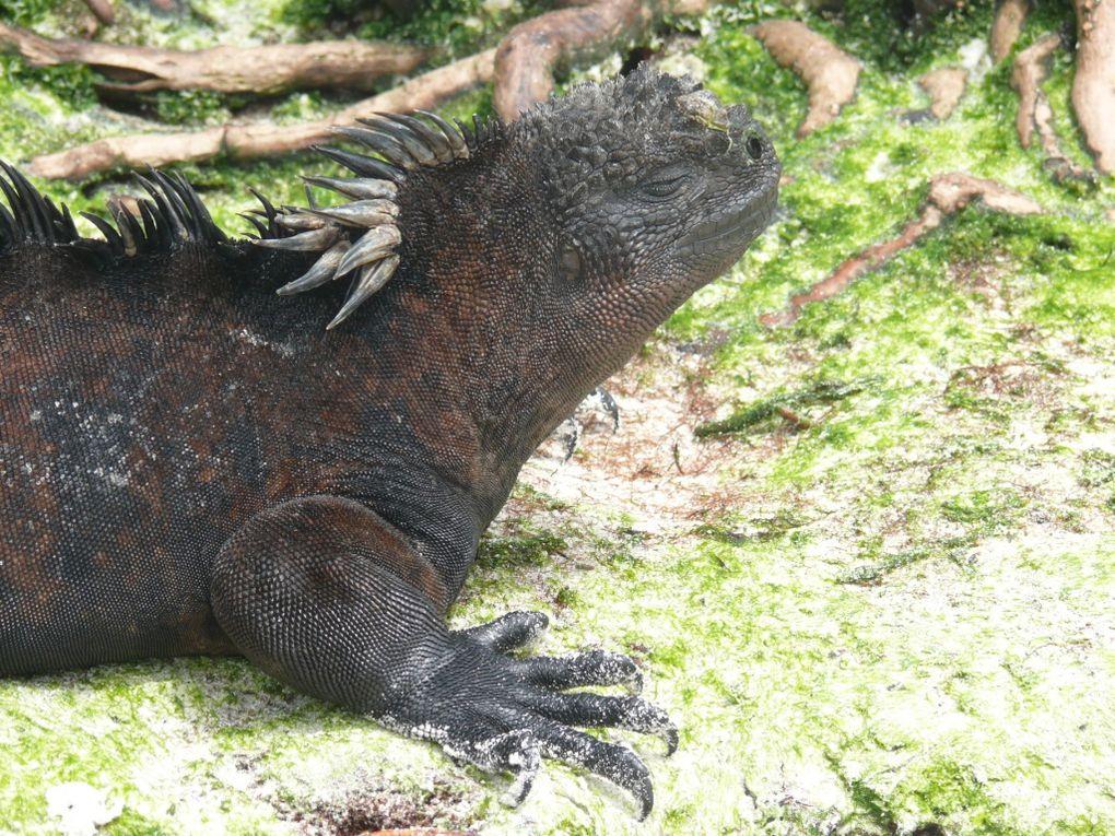 Les Galapagos