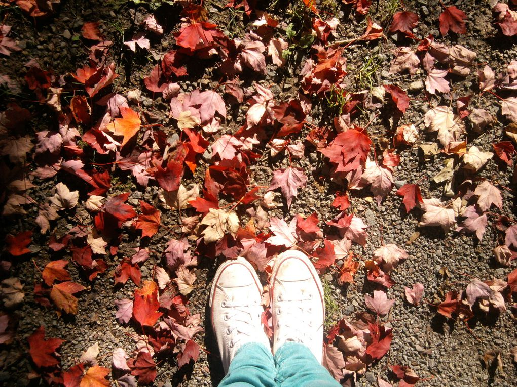 L'automne flamboyant