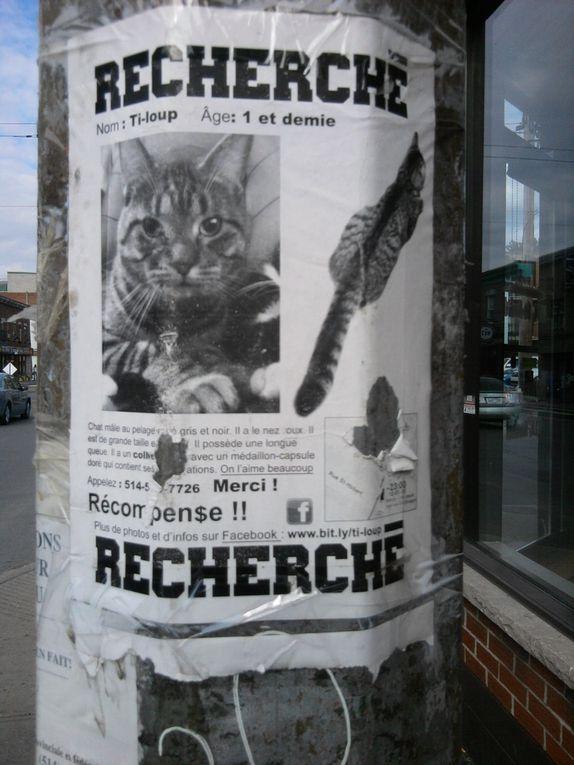 Les chats perdus