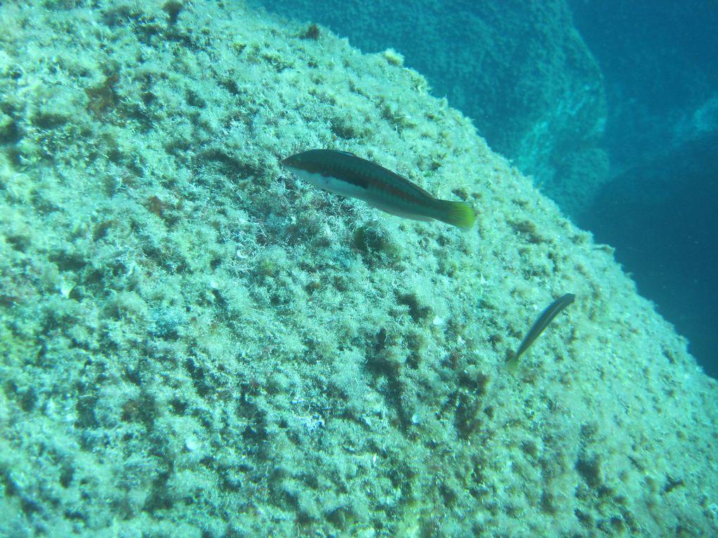 Corse 2011 Toussaint