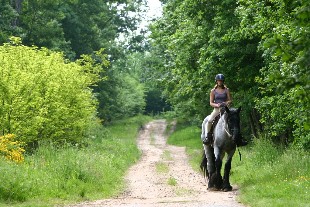 Coin Pension - Location - Pension Chevaux ...