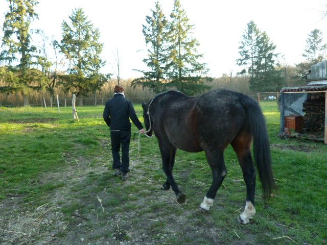 Coin Pension-Location-Pension Chevaux...