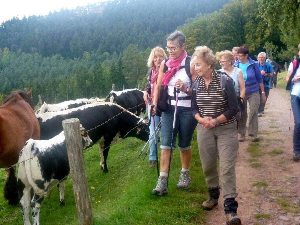 Les Vosges du Nord, diaporama (16 photos). Cliquez sur la flèche pour voir les photos une à une.