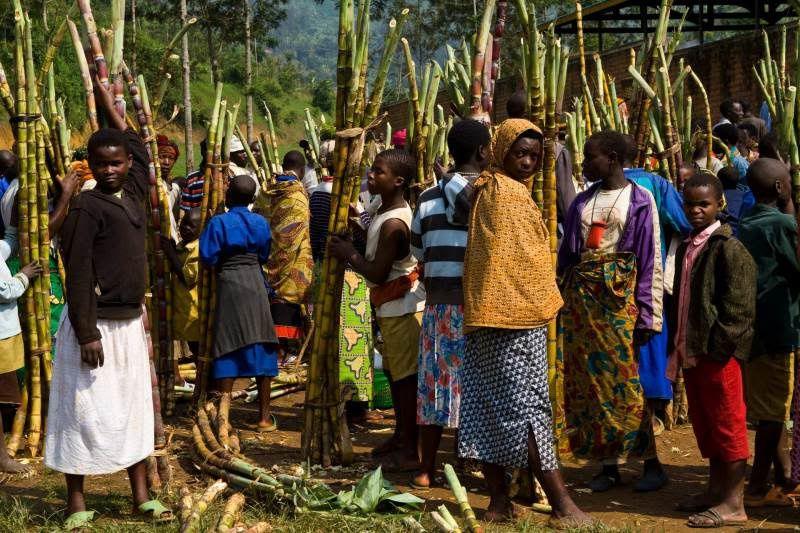 Las montañas Virunga son una cadena de volcanes en África oriental, a lo largo del borde septentrional de Ruanda, la República Democrática del Congo y Uganda (RDC). La cordillera es un brazo de la falla Albertina, parte del Gran Valle del Rift. Se localizan entre el lago Eduardo y el lago Kivu.- El Muni
