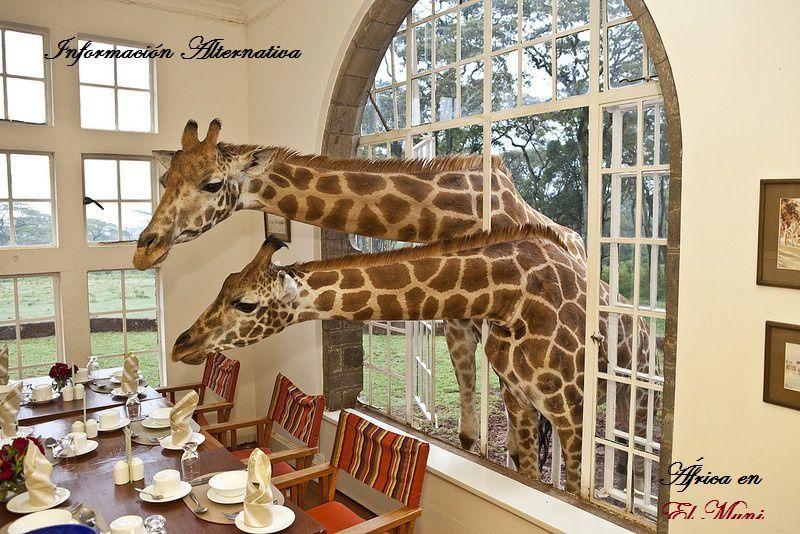 Imágenes de Kenya.- El Muni