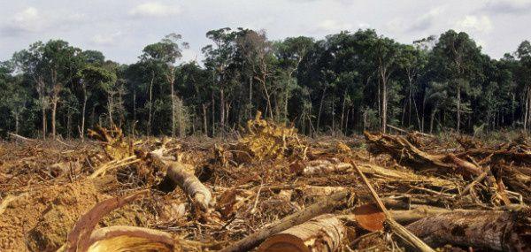 Imágenes de la devastadora deforestación que sufre Mozambique.- El Muni.
