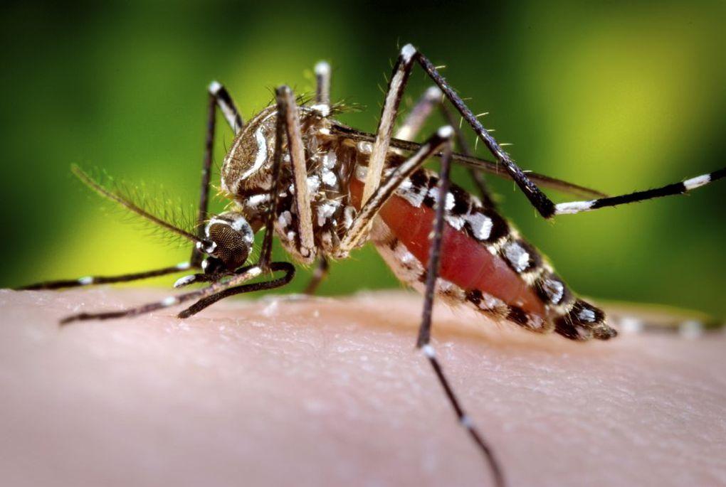 Una camiseta antimosquitos, es lo que ha creado una empresa Terrassa.
