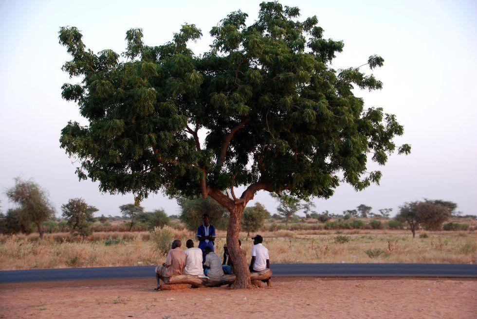 Senegal planta cara al desierto. Cuando el verde se impone al desierto - El Muni.