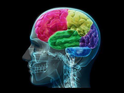 Imágenes cerebro.- El Muni.