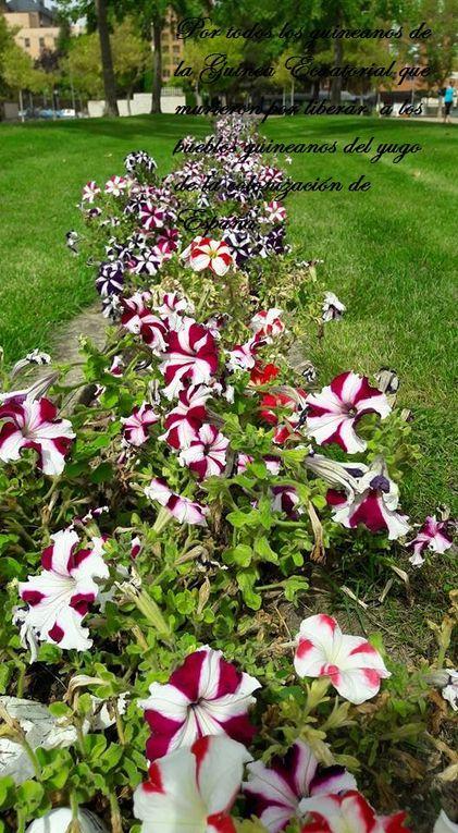 Estas flores, por los guineanos que murieron por liberara los pueblos de la Guinea Ecuatorial del yugo colonial de España.- El Muni.