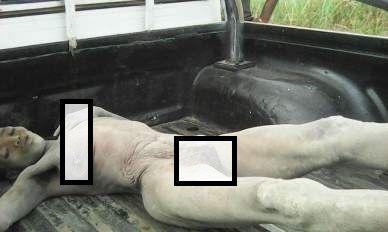 Rescatada por la policía tras ser enterrada viva por su novio.- El Muni.