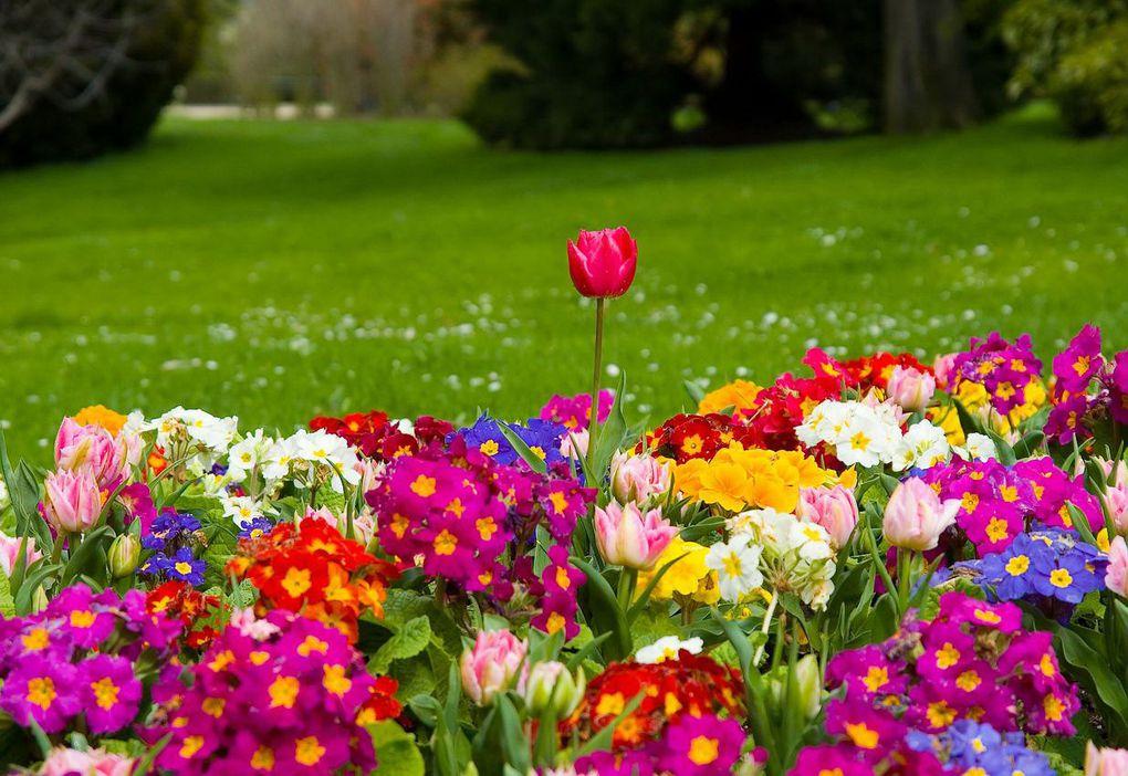 Voilà le printemps
