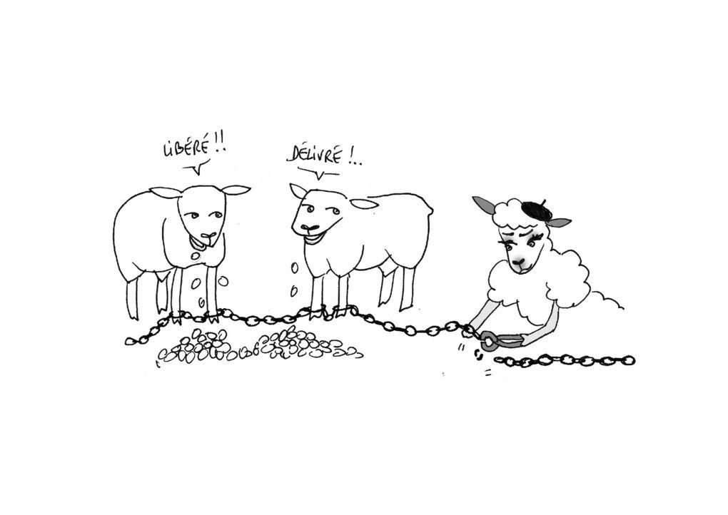 L'origine du Mouton Avranchin en quelques croquis