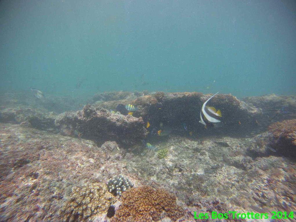 Quelques-unes de nos découvertes sous l'eau à White Beach!