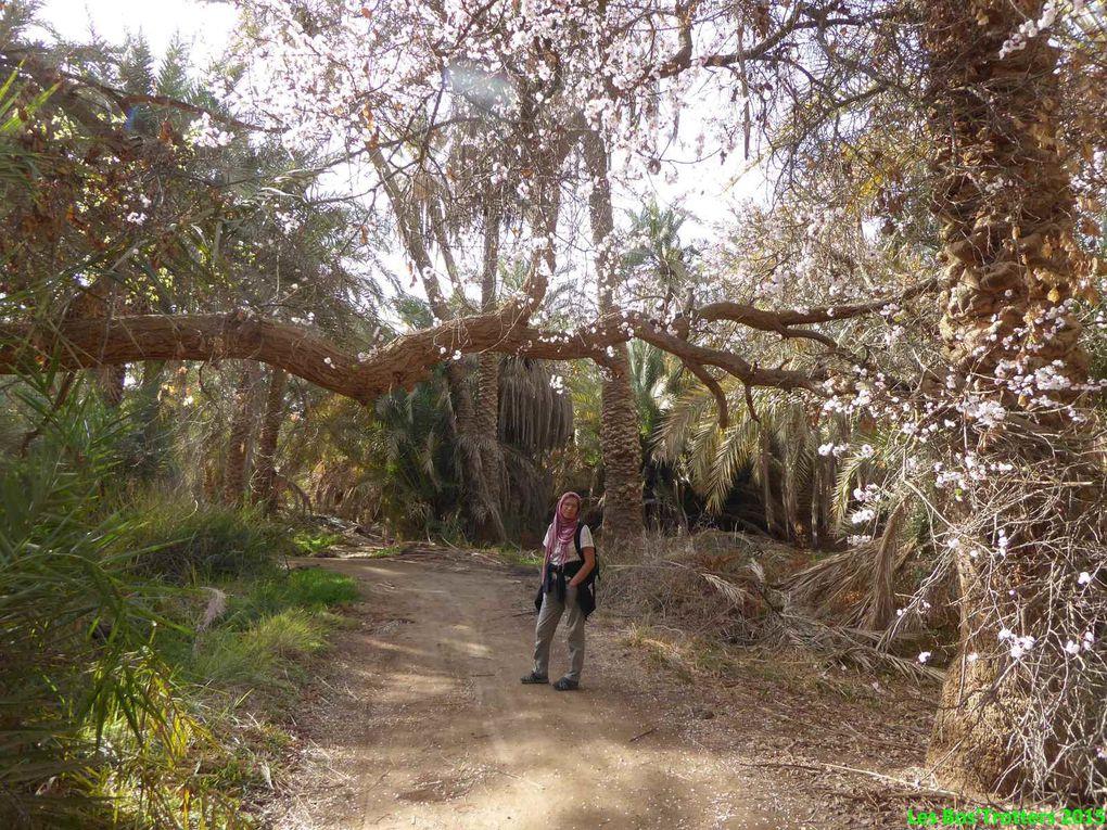 Oasis de Bahareya