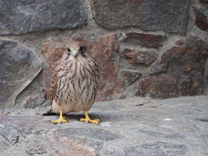L'oiseau qui m'a fait craquer : un faucon crécerelle