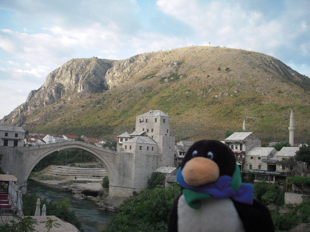 210 - Paulschi le pingouin voyageur