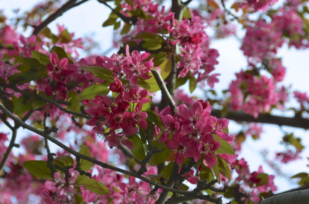 Voici les premières fleurs du printemps autour de mon lieu de travail