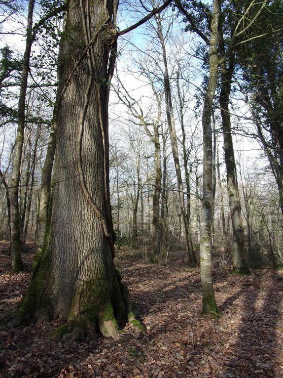 Sortie en forêt avec la Maison de la Rance