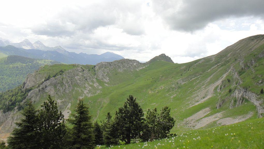 Le Jocou (2051m), depuis le col de Lus la Croix Haute