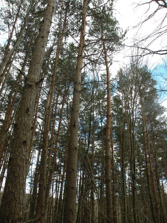 au bois de saint Marc