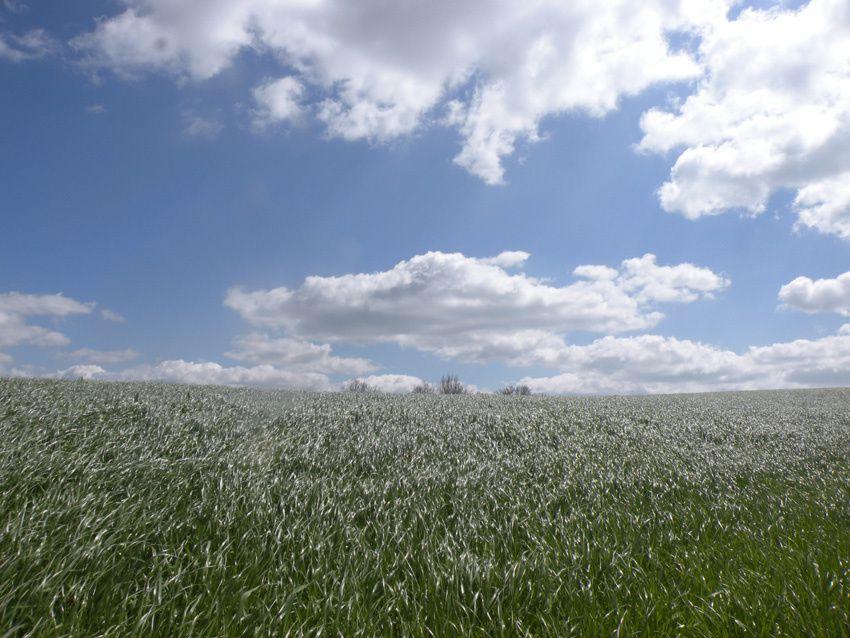 Les fermes anciennes de Sainte Agathe en Donzy
