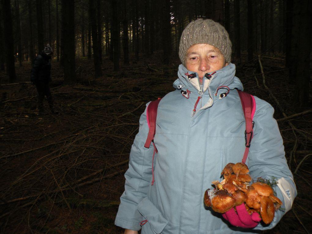 Dans les bois de Violay