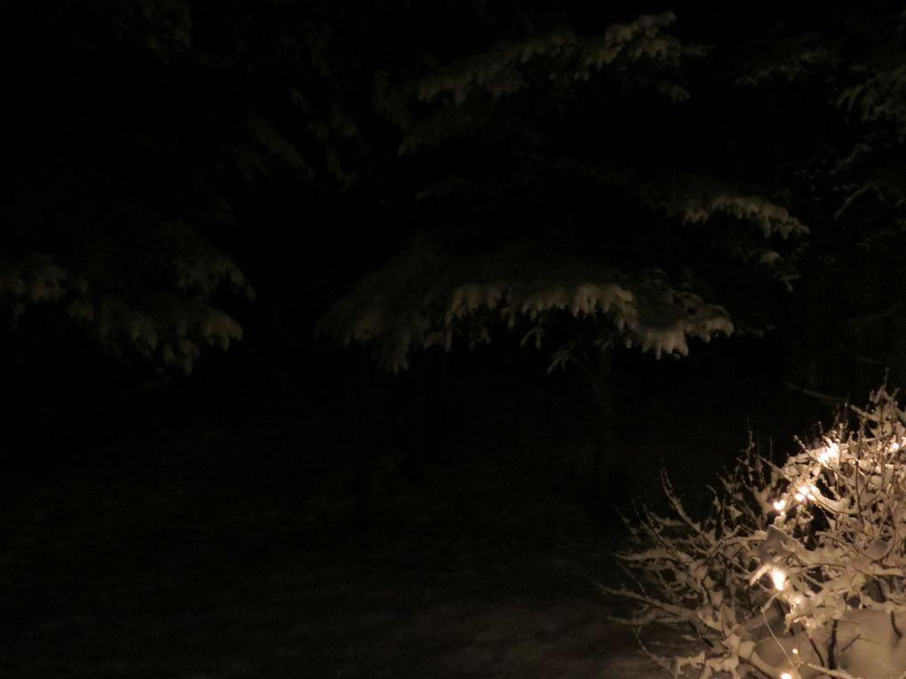 Oiseau de nuit,