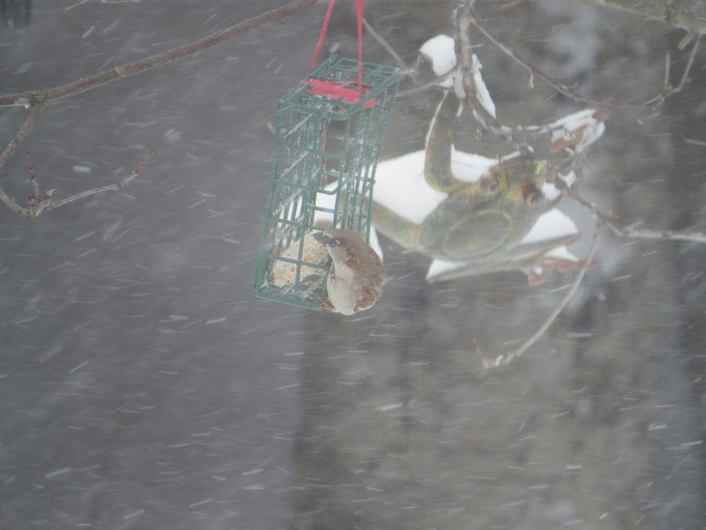 Oiseaux qui se chicanent ce matin dans la tempête &#x3B;o)