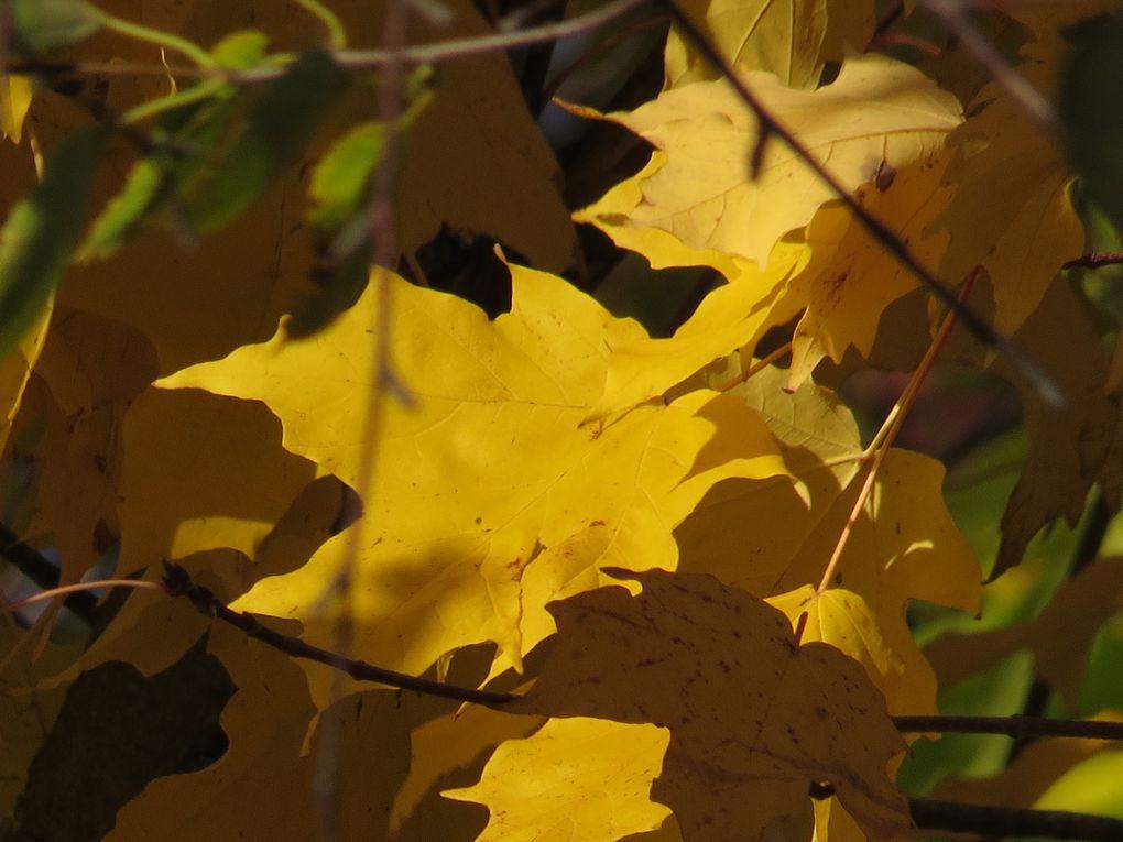 Ma vision ! De l'automne