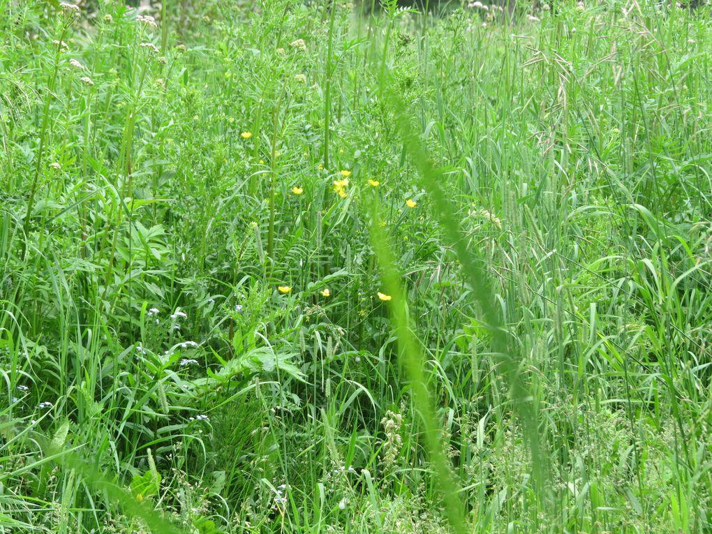 On tond les herbes hautes !