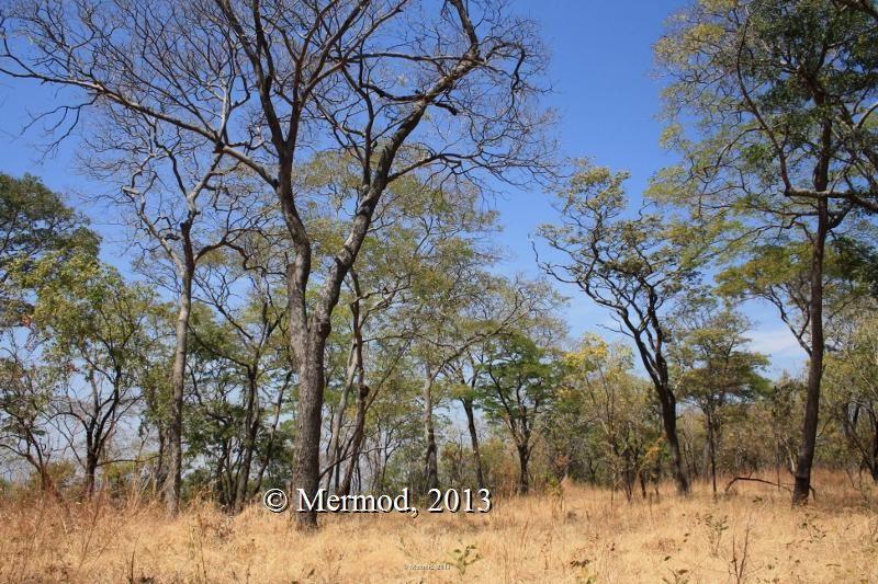 Kanono escarpment area