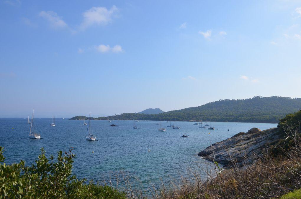 Découverte - Ile de Porquerolles (Provence-Alpes-Côte d'Azur) : Photos