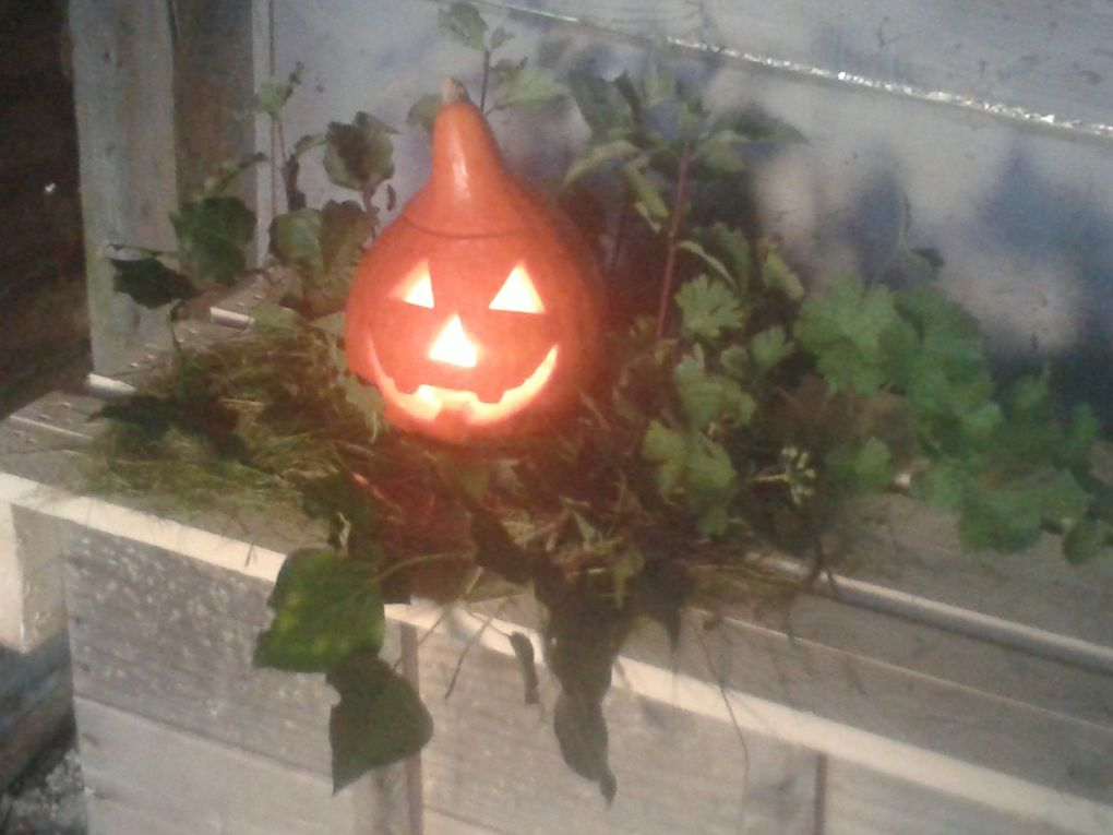 Trick or Treat ....