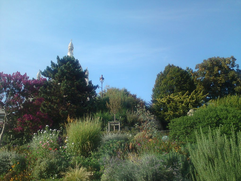 Un soleil magnifique à Montmartre !