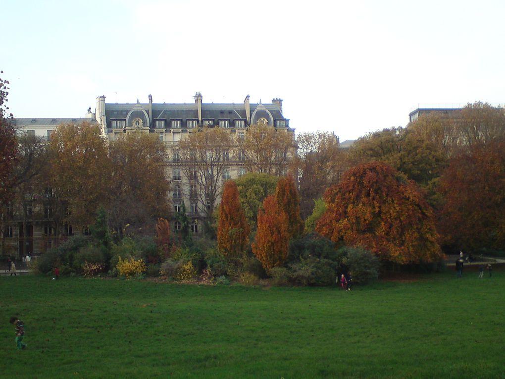 Magnifiques couleurs d'automne au Parc Monceau !