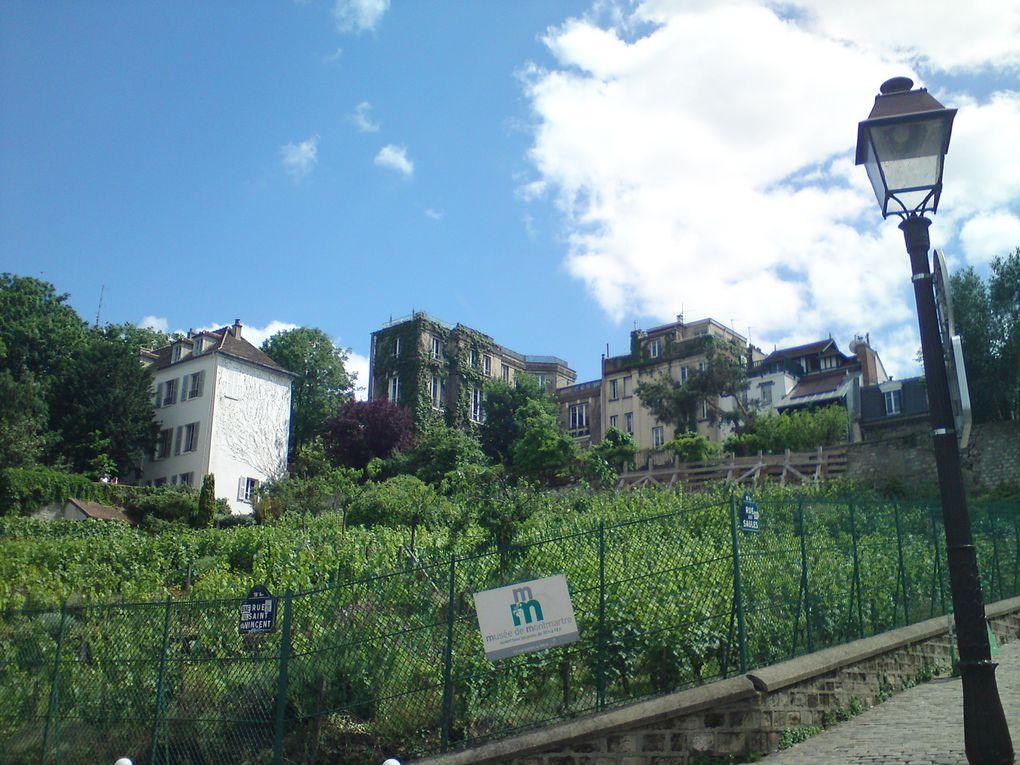 Les vignes de Montmartre !