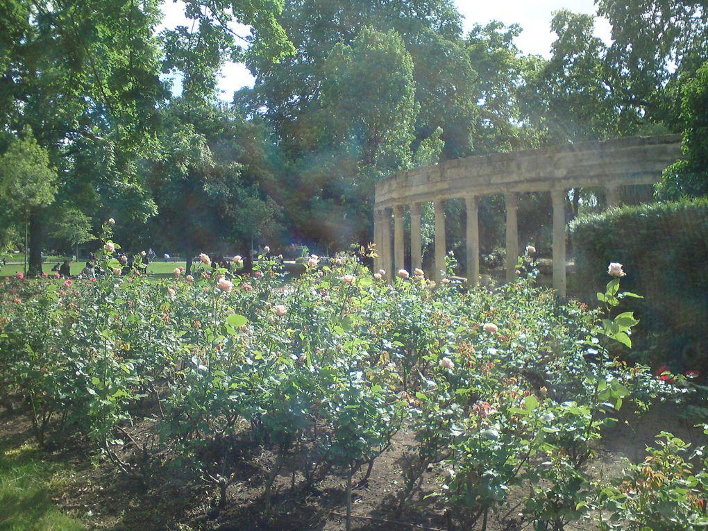 La roseraie du parc Monceau