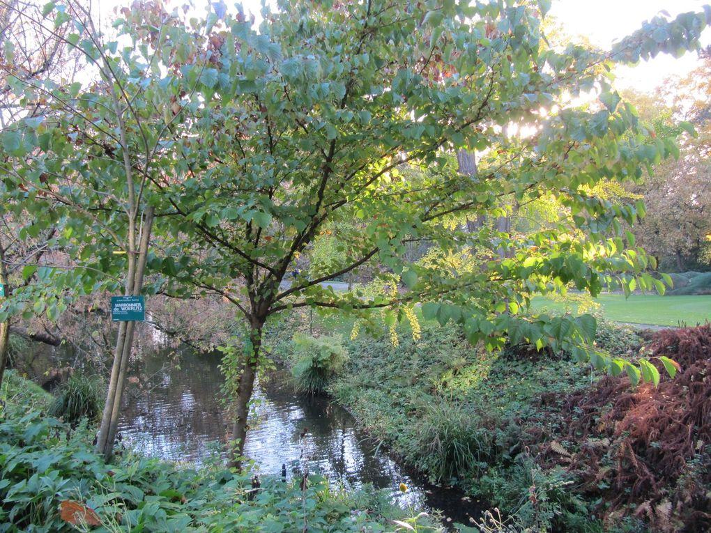 Balade au jardin des plantes de Nantes
