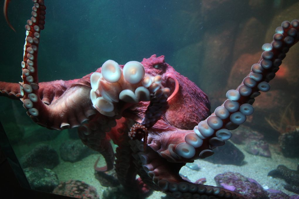 L'aquarium de Monterey