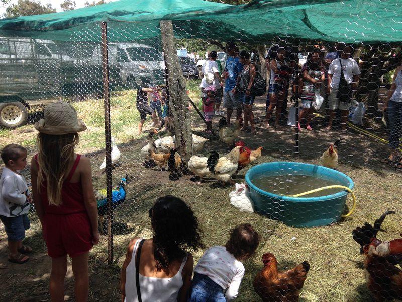 Marché paysan - Païta
