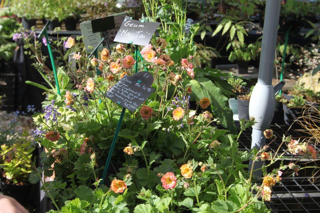 La fête des plantes de St Jean de Beauregard printemps 2014