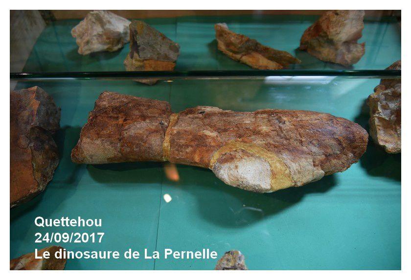 Quettehou : exposition, fossiles, minéraux