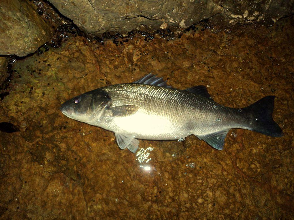 Du poisson à gogo.