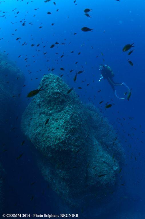 Monaco: La vie sous-marine à l'honneur
