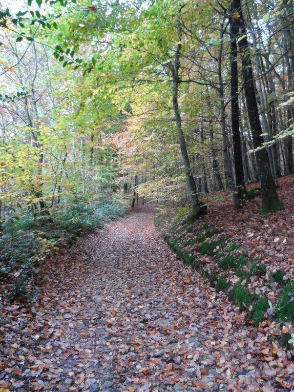 Dans les bois, les feuilles jonchent le sol et les arbres ont revêtu leurs plus belles parures d'automne. A Fontanès, la bise souffle et me gèle, je me dépêche de redescendre vers des lieux plus hospitaliers. 41 km et des broutilles au compteur, je ne sais pas si je vais modifier ce parcours, à quoi bon  rajouter 3 km de plus s'ils ne sont pas top ? A suivre...