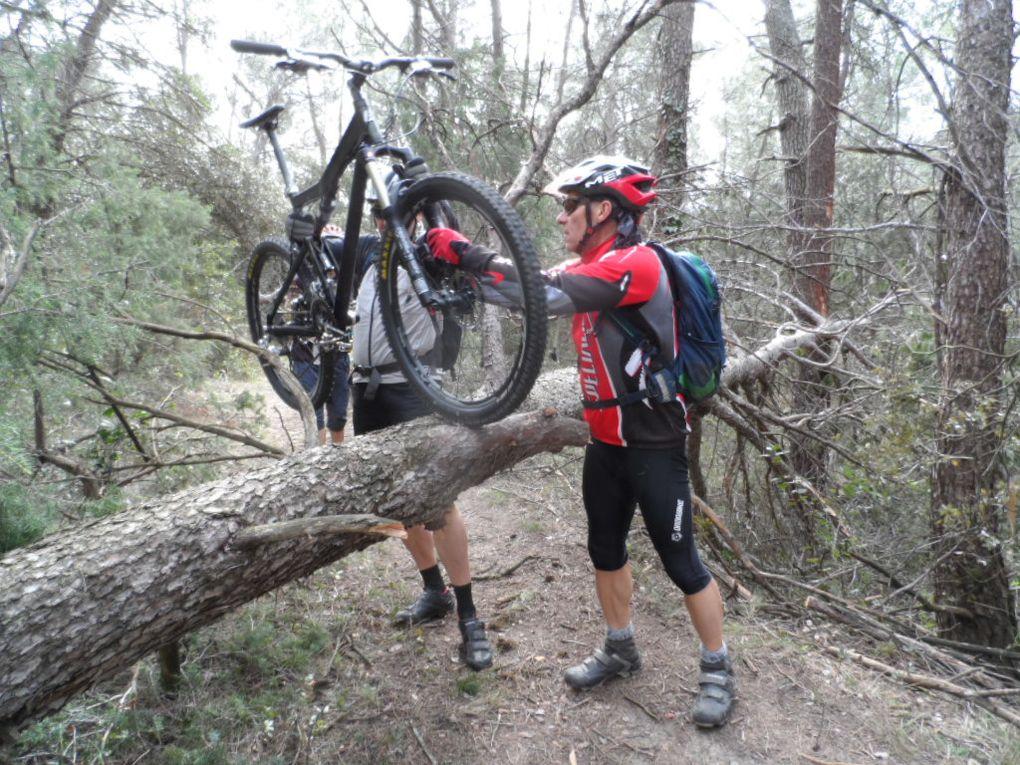 Une tempête s'est abattue sur la région il y a peu et des arbres sont en travers du chemin, chacun son style pour passer le VTT, moi je suis passée sous l'arbre.