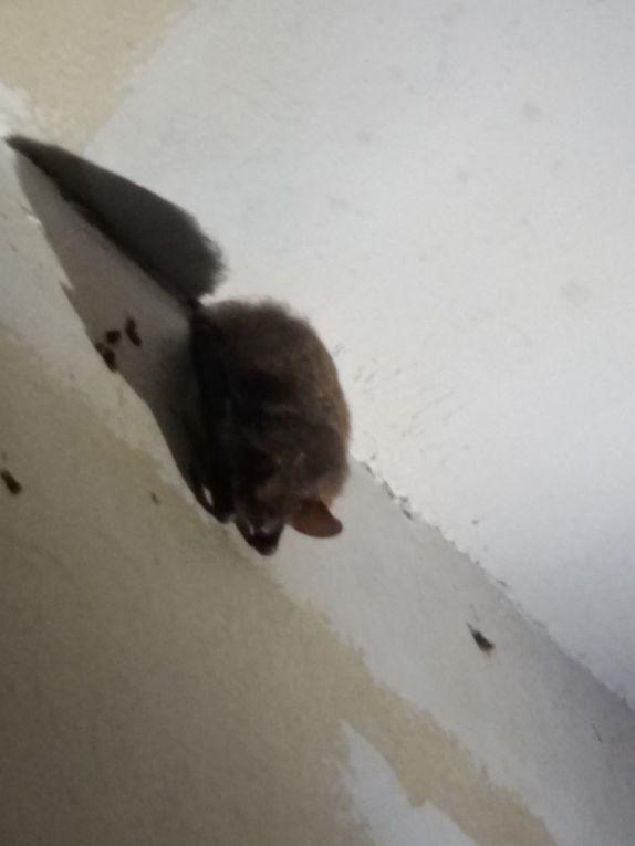 Actions pour la biodiversité - un refuge à chauve souris à l'hôtel