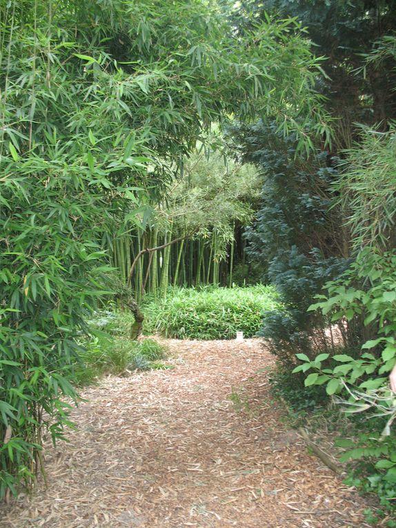 Planbuisson, bambouseraie - Périgord