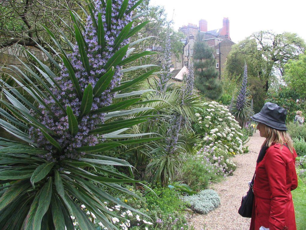 Chelsea Physic Garden - Londres